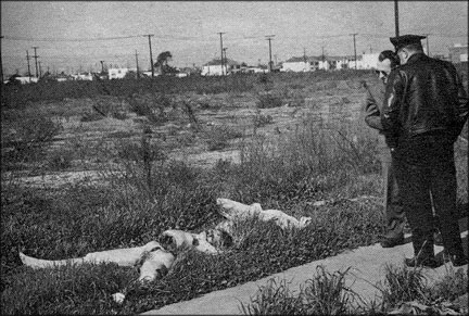 The Black Dahlia Crime Scene